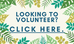 Looking to Volunteer: Click Here