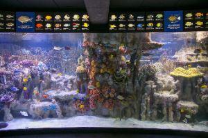 New England Aquarium Image