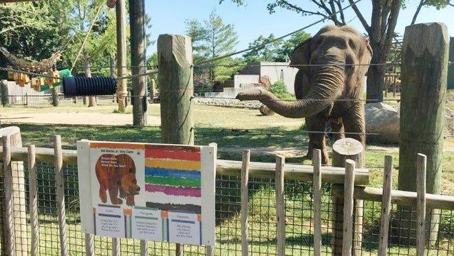 Buttonwood Zoo Elephant Image