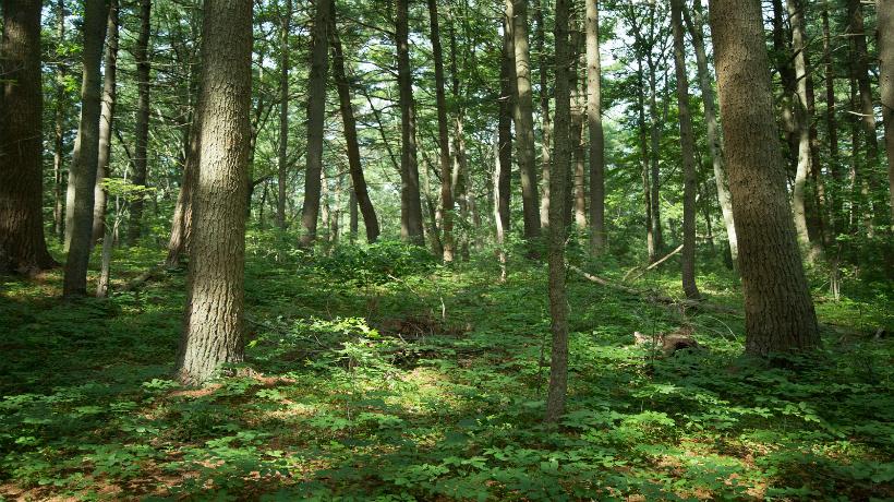 Massachusetts Forestry image