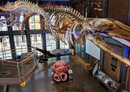 New Bedford Whaling Museum Image