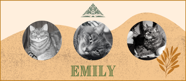 Picture of Emily the cat