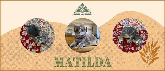 Matilda the Cat