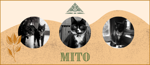 Picture of Mito the Cat