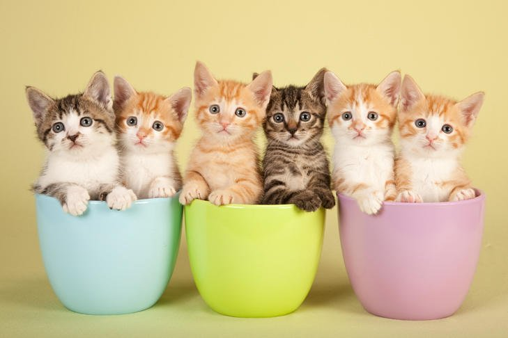 Multiple Kittens sitting in little teacups, being adorable