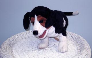 Baxter Beagle