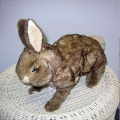 Collette Cottontail